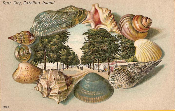 File:Shells card .png