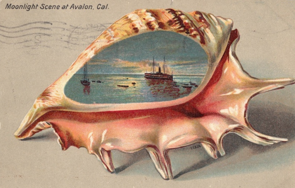 File:Conch card.png
