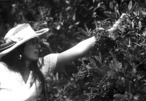 File:Marla Daily picking toyon berries .jpg