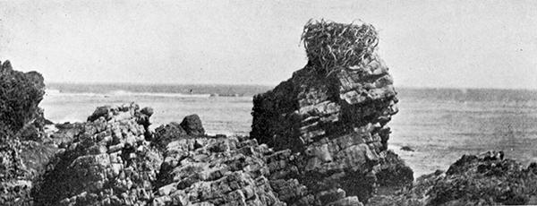File:Osprey Nest SCLI 1897.jpg