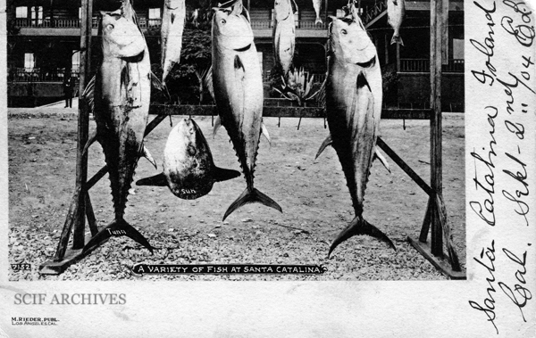 File:A Variety of Fish SCI©.jpg