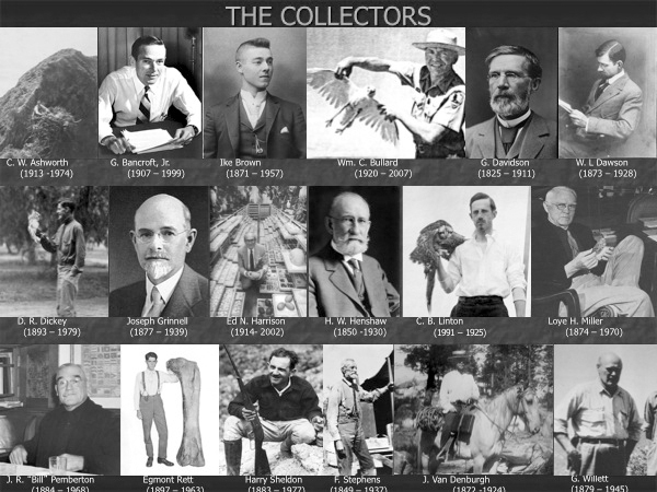 File:The Collectors.jpg