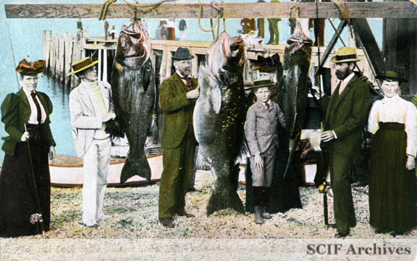 File:SCI JEW FISH ©.jpg