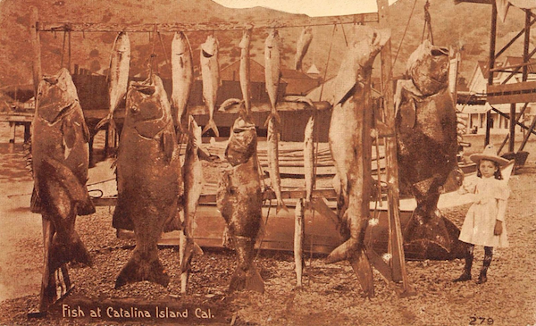 File:1912 bass.png