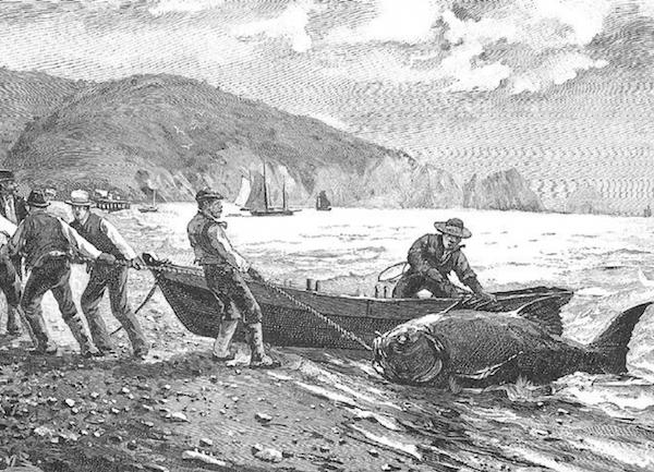 File:Haunts of Sea Bass.png