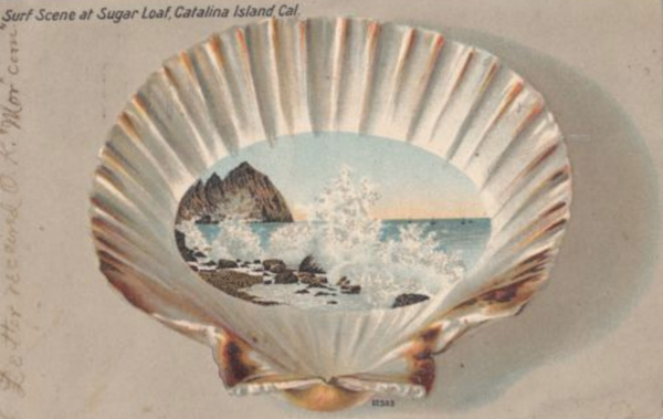 File:Scallop 1905.png