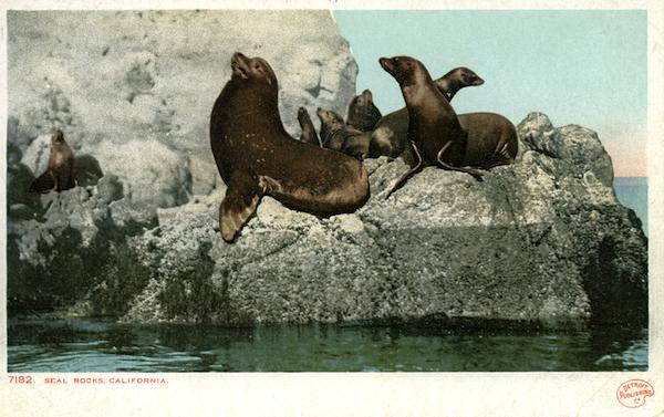File:7182 Seal Rocks, California - undivided back, Detroit pub 010.jpg