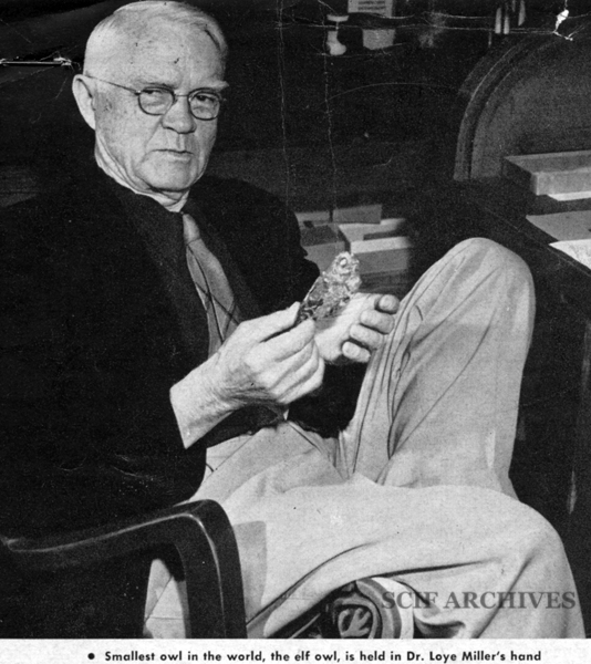 File:MILLER, Loye Holmes (1874-1970)©.jpg