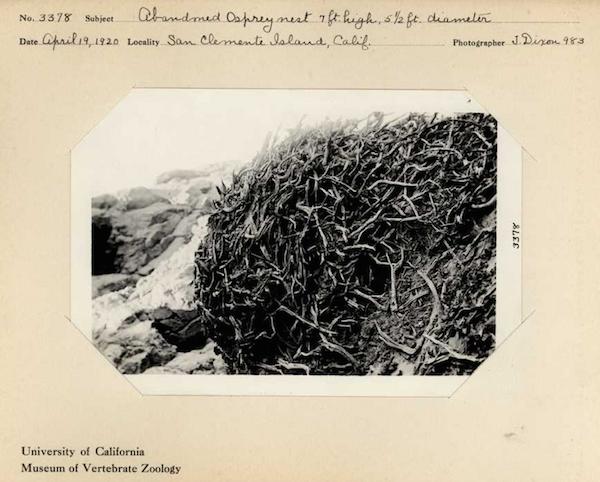 File:SClem Osprey Nest.png