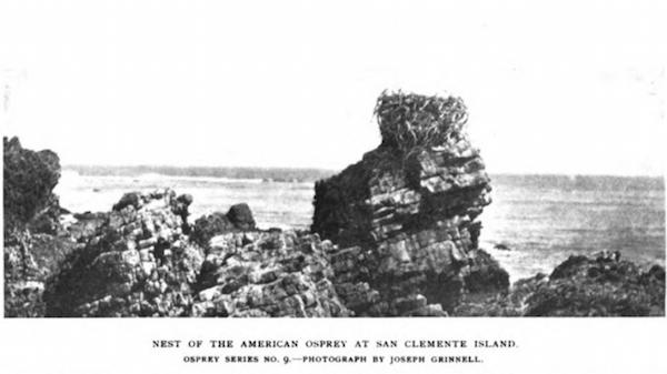File:Osprey 2(1) 1897.png