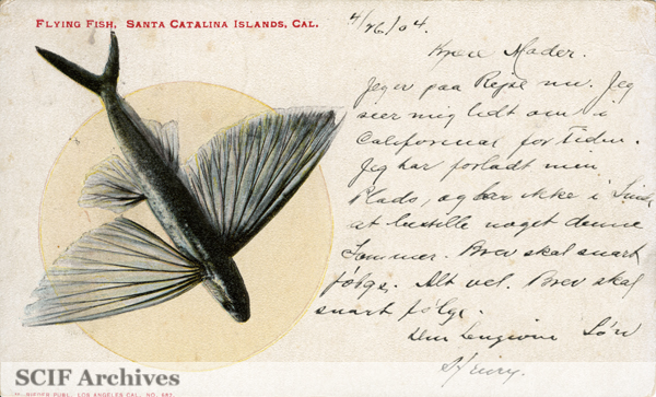File:01 Flying fish, Santa Catalina Island, Cal.jpg