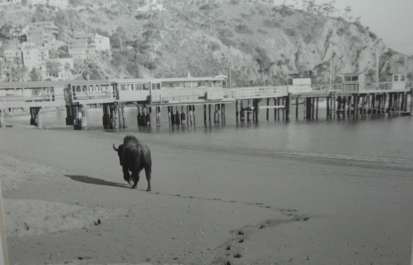 File:Bison on the beach.png