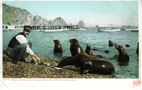 File:10777 Feeding the Seals on the Beach at Avalon- divided back ,m detroit pub. 015.jpg