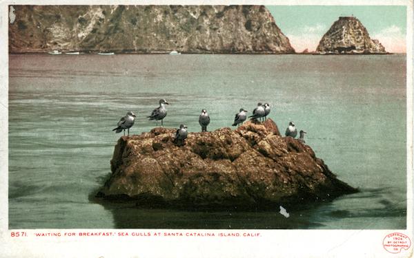 File:8571 Waiting for Breakfast sea gulls - undivided back, detroit photo.jpg
