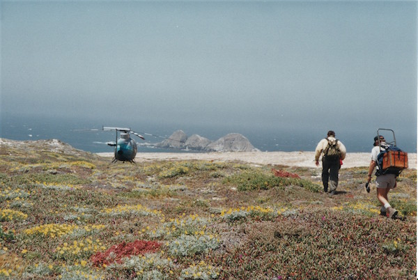 File:Almost There San Miguel Island 1994.jpg