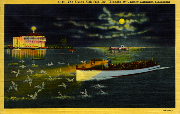 "File:C-44 The Flying Fish Trip, Str. ""Blanche W"", Santa Catalina.jpg"