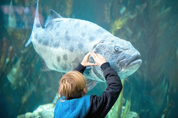 File:Aquarium bass.png