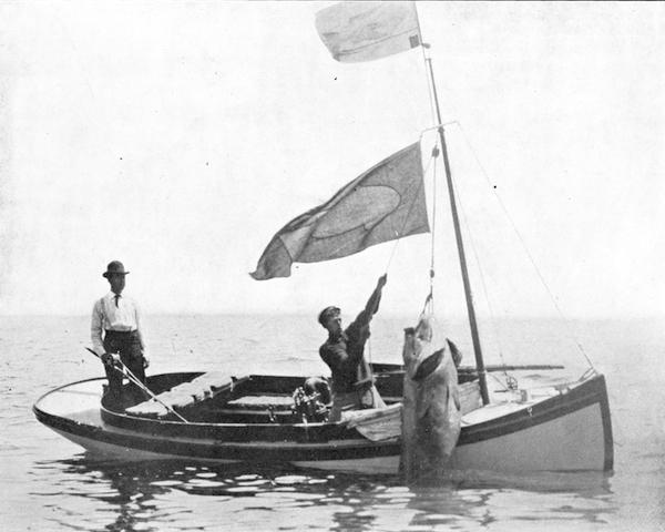 File:Black sea bass, Tuna club record - 436 Lbs, taken by L.G. Murphy.jpg