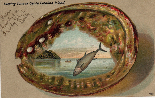 File:Abalone & Leaping Tuna pc.png