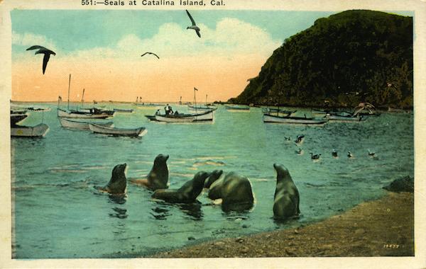 File:551- Seals at Catalina Island .jpg