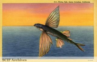 C-3 Flying Fish.jpg