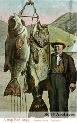 Black Sea Bass - WikiName