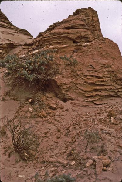 File:Cnemotettix burrows Sta Rosa.jpg