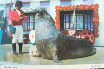 ELEPHANT SEALS - WikiName