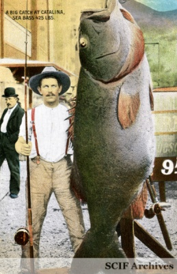 Black Sea Bass Wikiname