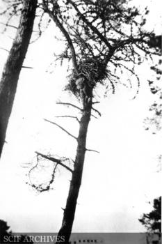 WODawson SCRI 1919 003.jpg