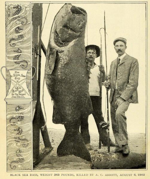 File:A. C. Abbott sea bass.png