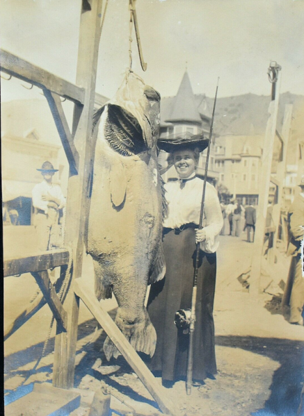 File:1904 sea bass.png