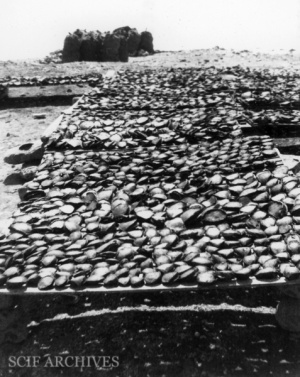Linton-abalone drying©.jpg