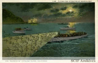 C-44 Flying Fish attracted by searchlight.jpg