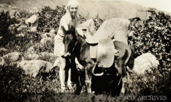 SCLI Summerfield Horse unknown and little horse 3.jpg